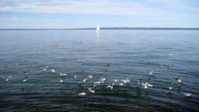 Swiss lake with sail Royalty Free Stock Image