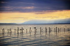 Swiss Lake with stormy sunset and birds on pilings. Sunset on a golden Swiss Lakeshore, with clouds in a stormy sky. Some birds stands on pilings. Leman stock photo