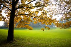 Swiss Landscape Stock Images