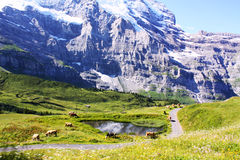 Swiss landscape Royalty Free Stock Images