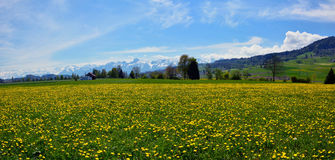Swiss landscape countryside during spring season Royalty Free Stock Image