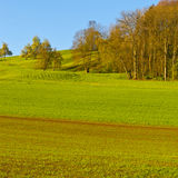 Swiss landscape with forests and meadow. Swiss landscape with  forests and meadow early in the morning. Agriculture in Switzerland, arable land and pastures Royalty Free Stock Images