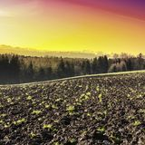 Plowed fields at sunrise. Swiss landscape with forests and plowed fields at sunrise. Agriculture in Switzerland, arable land and pastures Royalty Free Stock Images