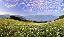 Swiss landscape in spring with flower meadow and lake Royalty Free Stock Photo