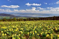 Swiss landscape in spring with flower meadow and lake Stock Photo