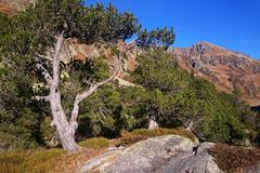 Swiss landscape with tree at sunny day Royalty Free Stock Photo