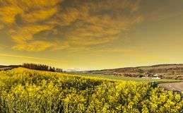 Free Swiss Landscape With Meadows Stock Photos - 115638343