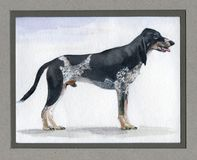 Swiss, Lucerne hound painted in watercolor in profile Royalty Free Stock Image