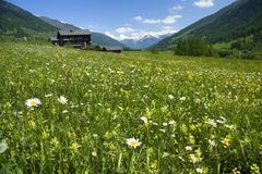 Swiss Meadow. A colorful meadow somewhere in Swiss Alps royalty free stock image