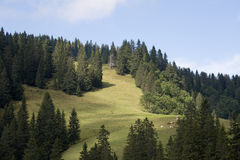 Swiss meadow. A swiss alps meadow with some pine tree Stock Photo