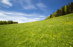 Swiss meadow landscape Royalty Free Stock Photo