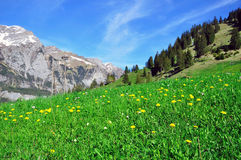 Swiss natural landscape Stock Photos