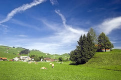 Swiss pasture in the summer Stock Photos