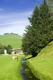 Swiss pasture in the summer Royalty Free Stock Photo