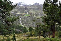Swiss Pine forest of Obergurgl, Austria. Image shows pines on the right and on the left. In the middle high alpine mountains with a waterfall. On the bottom is a Royalty Free Stock Image