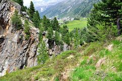 Swiss Pine forest of Obergurgl, Austria Royalty Free Stock Photos