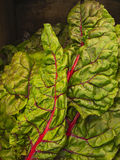 Swiss Rainbow Chard Stock Images