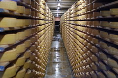 Swiss ripening cheese Royalty Free Stock Photography