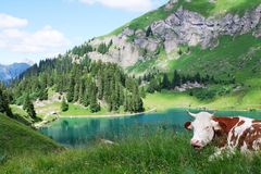 Swiss rural landscape Stock Photos