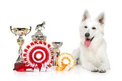 Swiss Shepherd dog on  white background Stock Image
