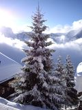 Swiss skiing royalty free stock photo