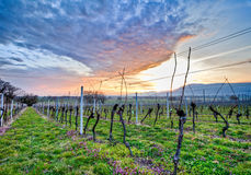 Swiss Vineyard Stock Photography