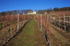 Swiss vineyard. Near swiss Lake coastline is cultivated by vineyard Stock Photo
