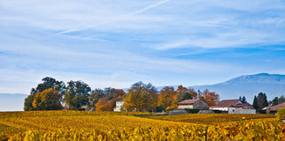 Swiss Vineyard And Farmhouse. View of a Swiss Vineyard in and a farmhouses in Autumn Stock Photos