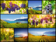 Swiss vineyards Stock Photos