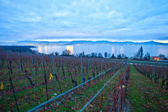 Swiss Vineyards at dawn. A vineyard in Switzerland at dawn with chablais Alps and Lake Geneva in the background. The sun is still rising behind the mountain Royalty Free Stock Images