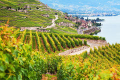 Swiss vineyards Stock Photography