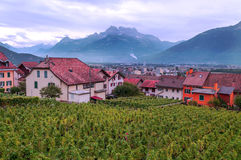 Swiss vineyards with mountains Stock Photography
