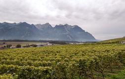 Swiss vineyards with mountains Royalty Free Stock Photo
