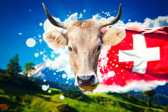 Swiss welcome card. With milky cow portrait, flag and traditional mountains landscape Royalty Free Stock Photography