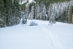 Swiss Winter - Forest covered in snow Royalty Free Stock Images