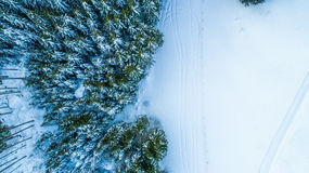 Swiss Winter - Trees from above Stock Photo
