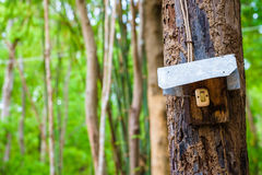 Switch in the forest Stock Images