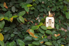 Switch with leaf background Stock Photo
