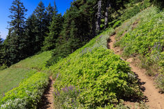 Switchback Trail. This switchback trail leads through a clearing on the side of a mountain as it climbs to the lookout on top of Iron Mountain in the Oregon Royalty Free Stock Photography