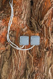 Switches on the tree Stock Photography