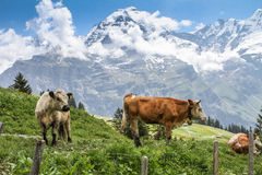 Switzerland, the Alps, the Lauterbrunnen valley Stock Image