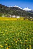 Switzerland Alps in spring. A sunny spring morning in the Poschiavo valley, Switzerland Royalty Free Stock Photo