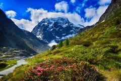 Switzerland, Arolla, Mont Collon. Mountain Mont collon in Switzerland with flowers stock image
