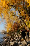 Switzerland: autumn colors at Lake Zürich in Seefeld. People obeying the swans royalty free stock image