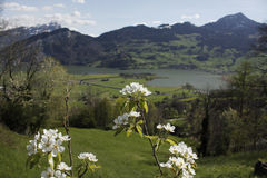 Switzerland blooming Royalty Free Stock Photography