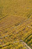 Colourfull landscape of the Unesco world heritage Lavaux along L royalty free stock photography