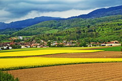 Switzerland countryside. Blooming rape field near small village,Geneva city vicinity,Switzerland Stock Image