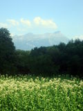 Switzerland landscape. Picture of swiss landscape with mountains, flowers, trees Stock Images