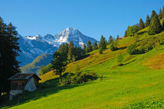 Switzerland. Meadow and mountains of Switzerland Stock Photo