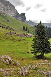 Switzerland mountain countryside with cows Stock Photos